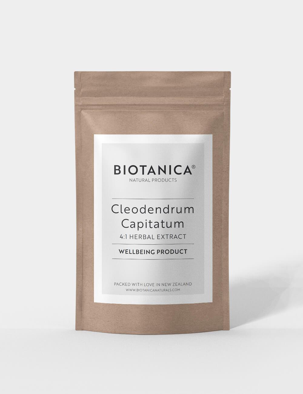 Cleodendrum Capitatum Image 1